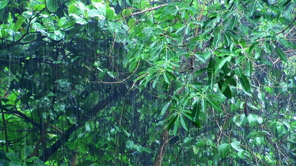Rain in summer forest.