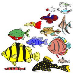 熱帯魚 淡水魚 種類
