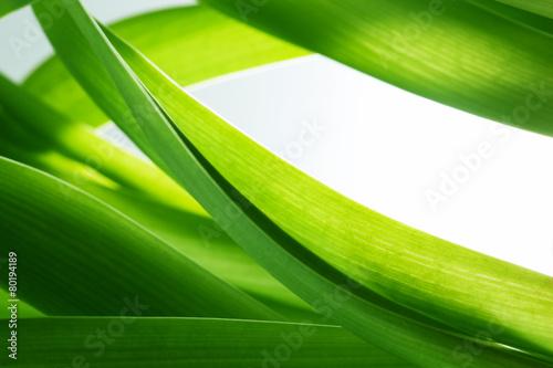 Fototapeta Green grass, plants background, white copy-space.