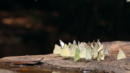 Group of butterflies in nature