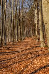 Wald im Frühling landschaft