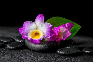 closeup of spa background with purple orchid dendrobium and gree