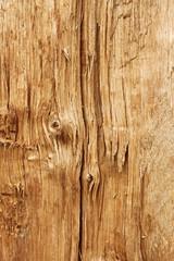 New wooden broken log