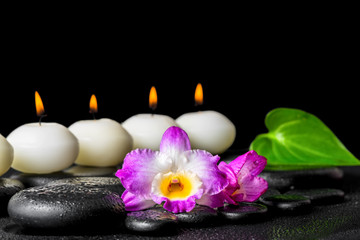 spa concept of row white candles, orchid flower dendrobium and g