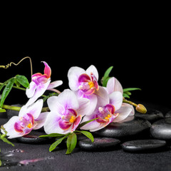 beautiful spa still life of purple orchid phalaenopsis and green