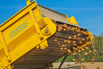 loadding of potato in harvest close up view on part machine