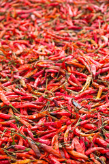 Dried Hot Pepper background