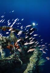Mediterranean Sea, wreck diving, sunken ship wreck - FILM SCAN