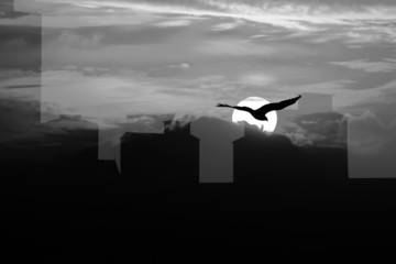 Double exposure of  Sunset   building  eagle black and white