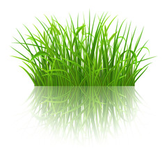 Spring green grass with reflection on white background