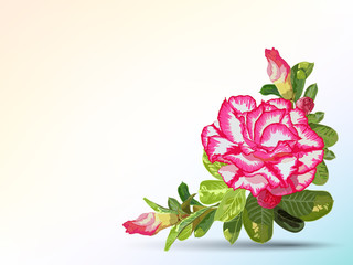 Background and label decorated with desert rose