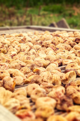 Many figs are dried in traditional procedure
