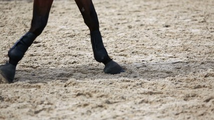 Hoofs of horses which jog by sand surface of equestrian arena