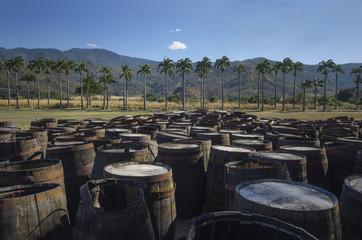 Barriles de ron en plantación de caña de azúcar.