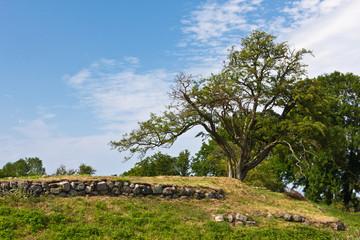 Baum an der  Schlossruine Søborg