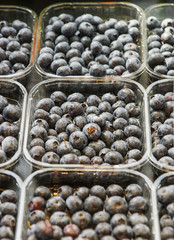 Blueberry in the plastic tray