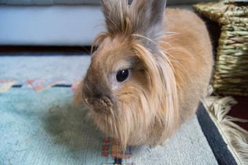 Kaninchen auf Teppich