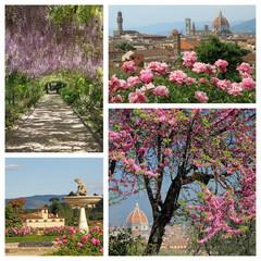 wonderful blooming plants in springtime in Florence