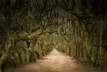 mystische Allee mit knorrigen Bäumen im Dämmerlicht