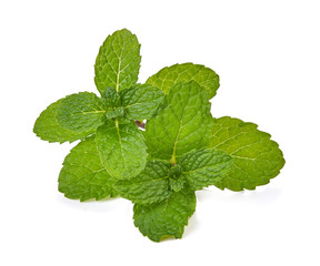 Mint leaves isolated with white on background