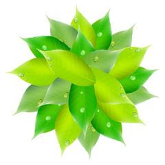 葉 新緑 円
