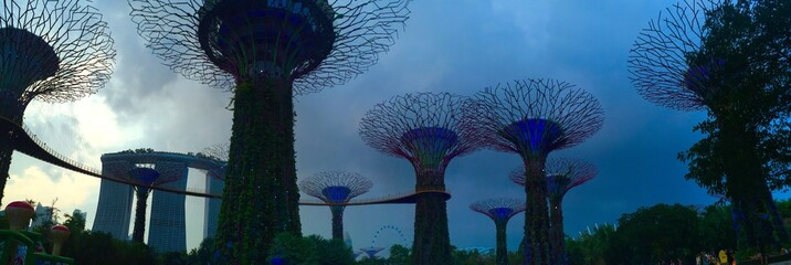 panorama view of super tree groove