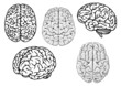 Black and white cartoon human brains - 80231378