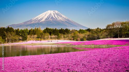 Fotobehang Japan moss phlox with mount fuji in background