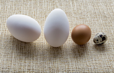 Eggs of goose, chicken and quail  on striped background
