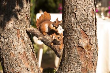 белки на дереве