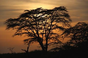 sunset,Tanzania