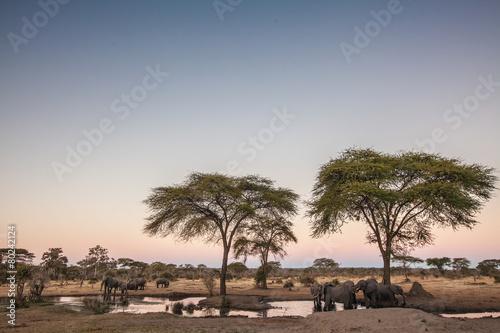 Staande foto Afrika Elephants drinking