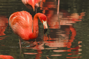 pink flamingos in a small pond in the park