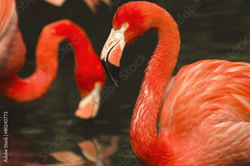 Foto op Aluminium Flamingo pink flamingos in a small pond in the park