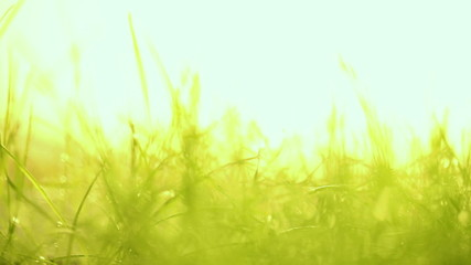 Macro slide motion of young grass