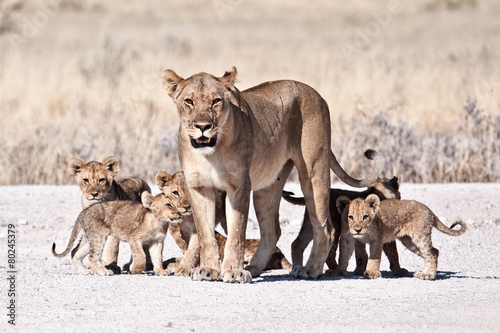 Foto op Canvas Leeuw Lioness and cub