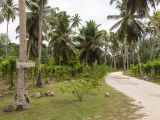 vanilla plantation