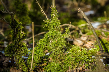 Moss close-up.