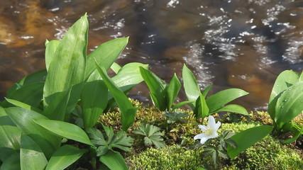 vidéo de rivière au printemps