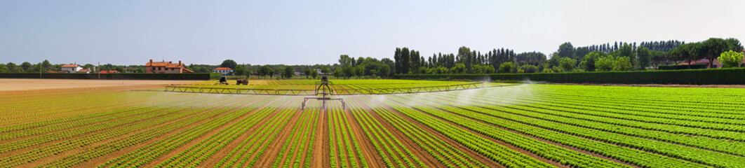 Irrigation field panorama