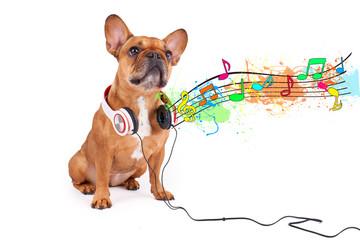 Hund lauscht der Musik