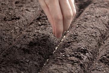 Kräuter samen einpflanzen