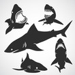 Set of Sharks - 80257780