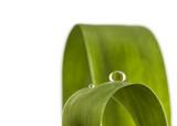 Wassertropfen auf Blatt © Matthias Buehner