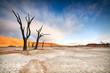 Deadvlei Trees - 80259321
