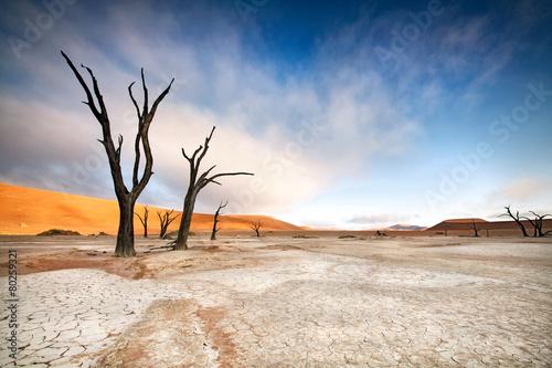 Aluminium Woestijn Deadvlei Trees