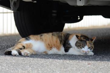 車の下で寝ころぶ猫