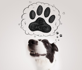 Cute border collie with paw above her head