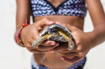 Young girl playing with turtle on tropical white sandy beach