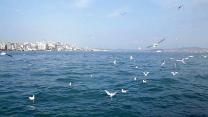 Seagulls over the Bosphorus. Istanbul